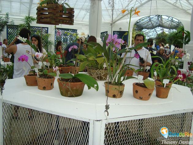 Jardim Botânico Rio de Janeiro dicas para aproveitar melhor