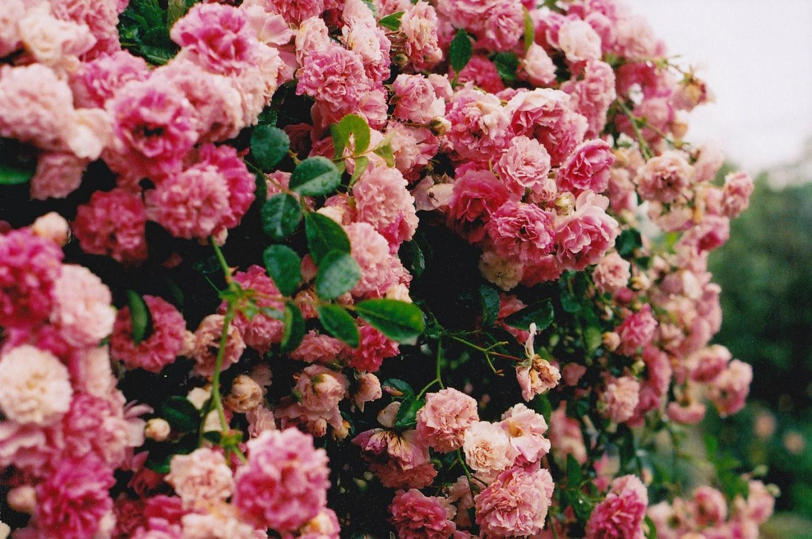 Цветы фото в твиттере