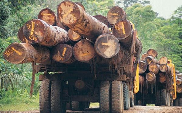DEFORESTACION AMAZONAS 2014