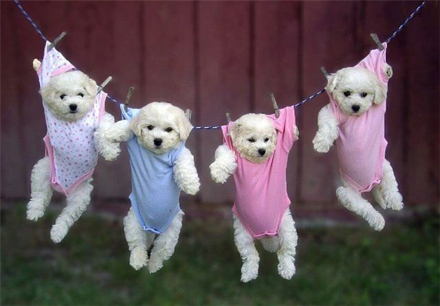Wonderful Funny Army Adorable Dog - 111111  Collection_361652  .jpg
