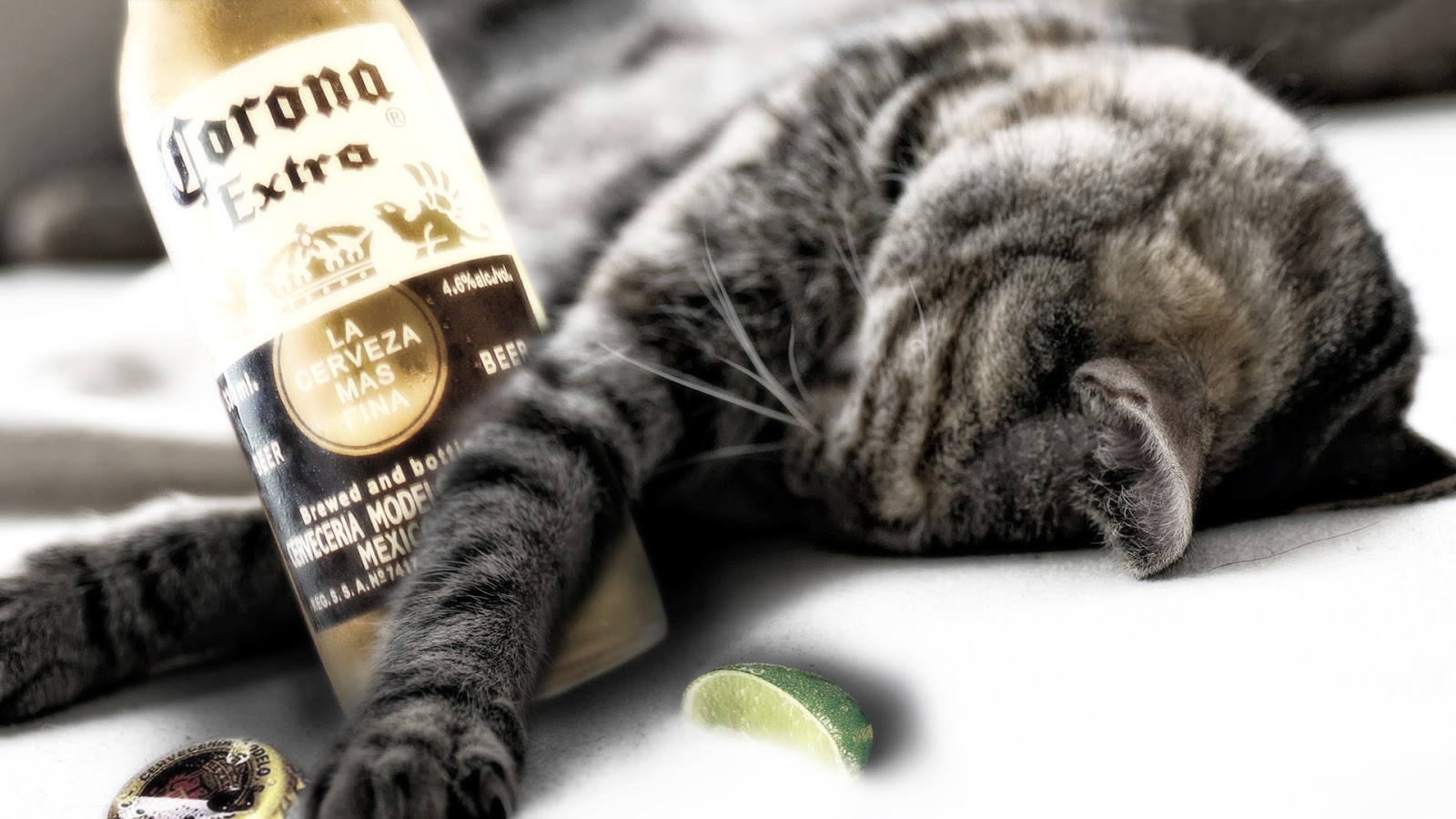 Cat Bottle Down Beer Funny Wallpapers