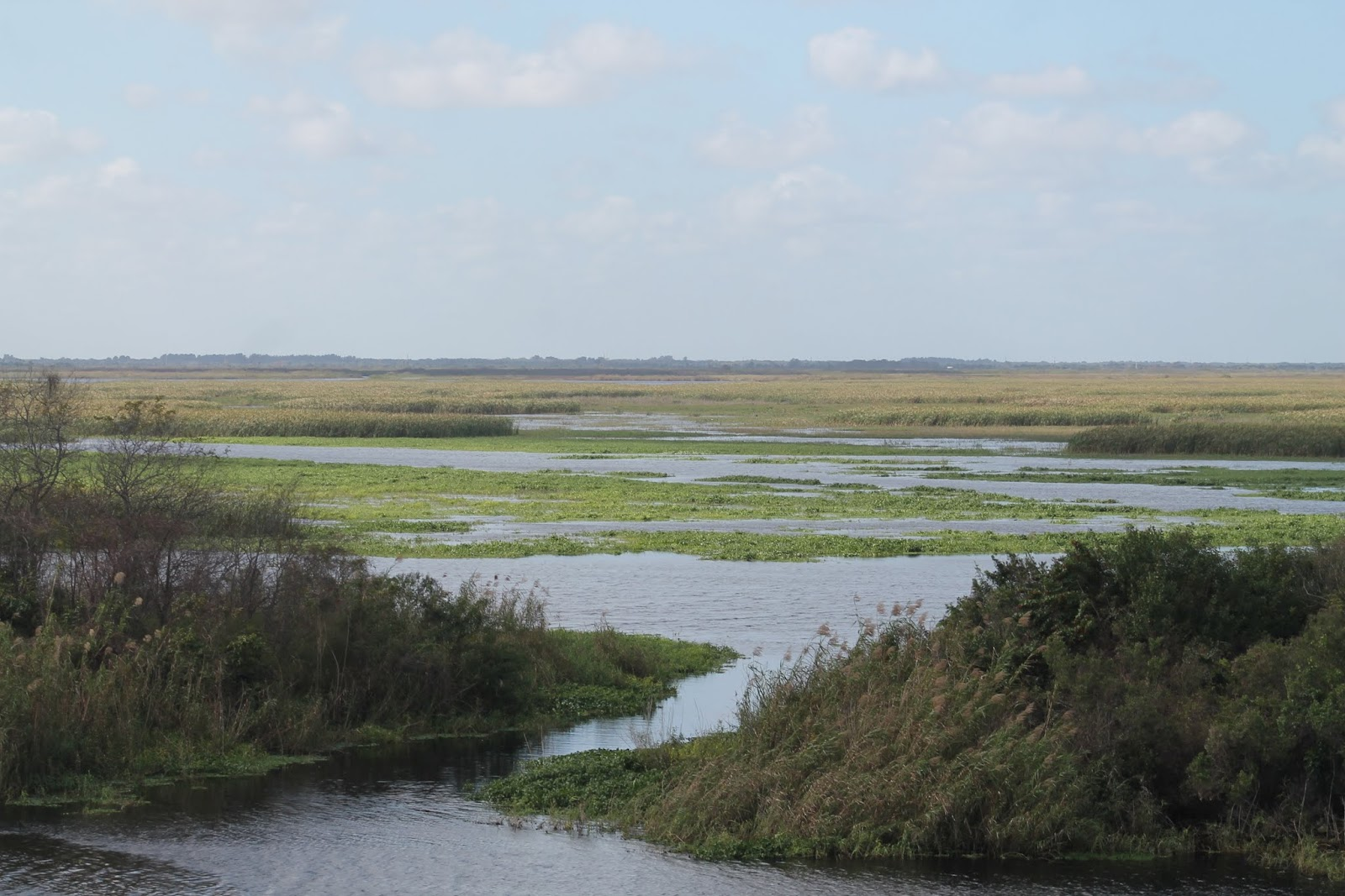 Harney Pond y Fisheating Creek