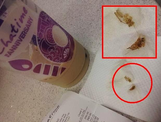 cockroach in Chatime milk tea