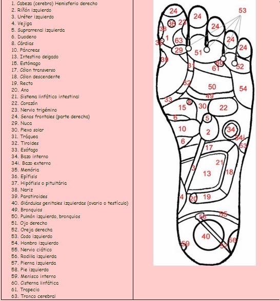 zona refleja del pie izquierdo en la zona plantar