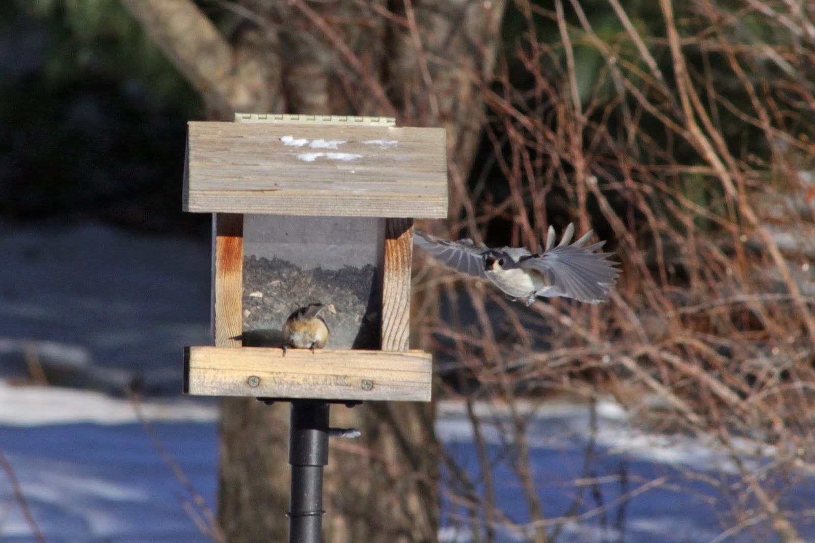 flying to feeder two
