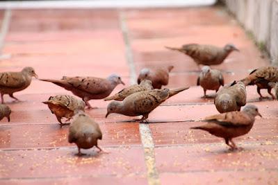 Encontrei um bando de rolinhas, mas acho que não são as que o Malafaia procura