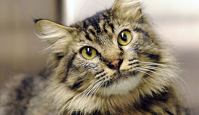 Que significa soñar con gatos de color