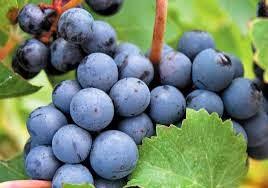 origen del vino
