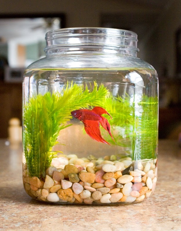 Cool glass fish bowl decorations ideas and tips for How to make a fish bowl