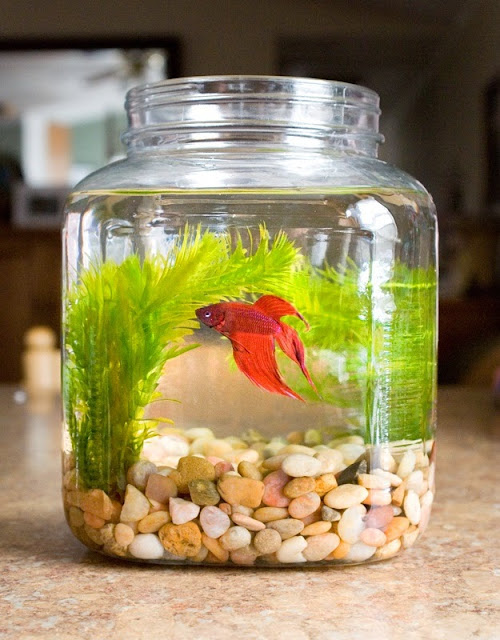 glass fish bowl decoration ideas, decorative fish bowl plants