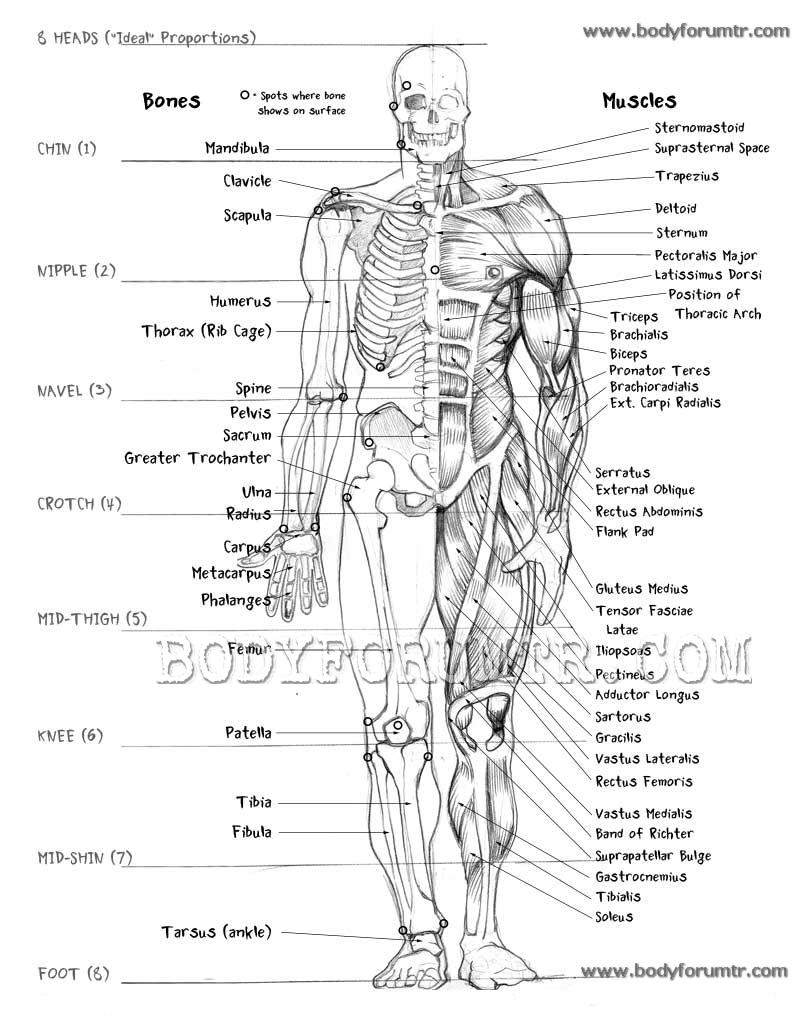 pa u00dc u0026 39 de ya u015eam  ders  anatom u0130