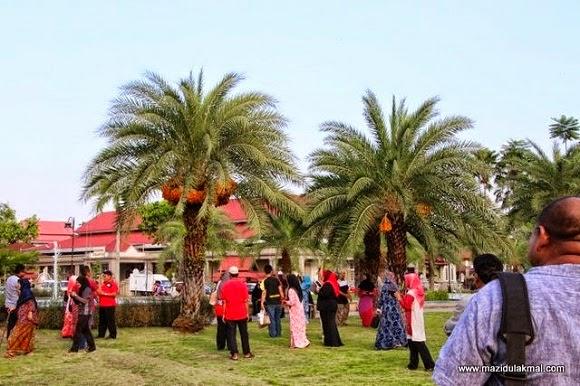 Pohon Kurma Berbuah Lebat di Kota Bahru (9 Gambar)