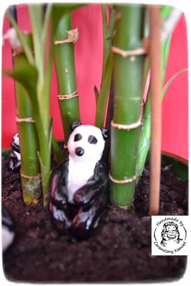 Bambus dla pandy
