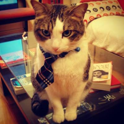 Gato con corbata