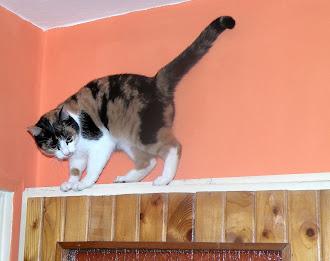 Mój kot............