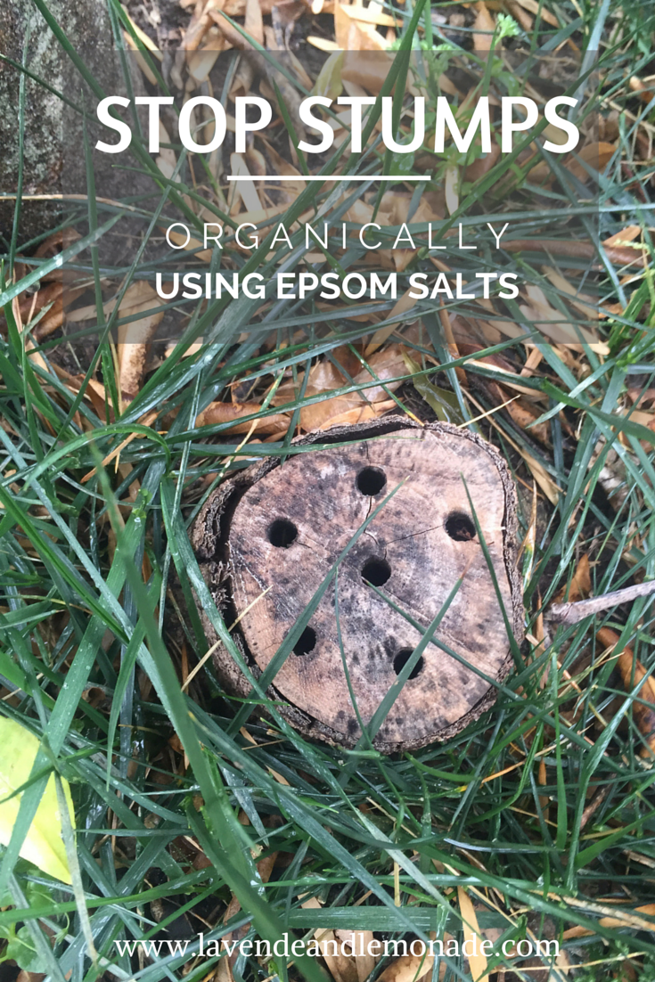 The Results: Using Epsom Salts to Stop Stumps from Growing ...