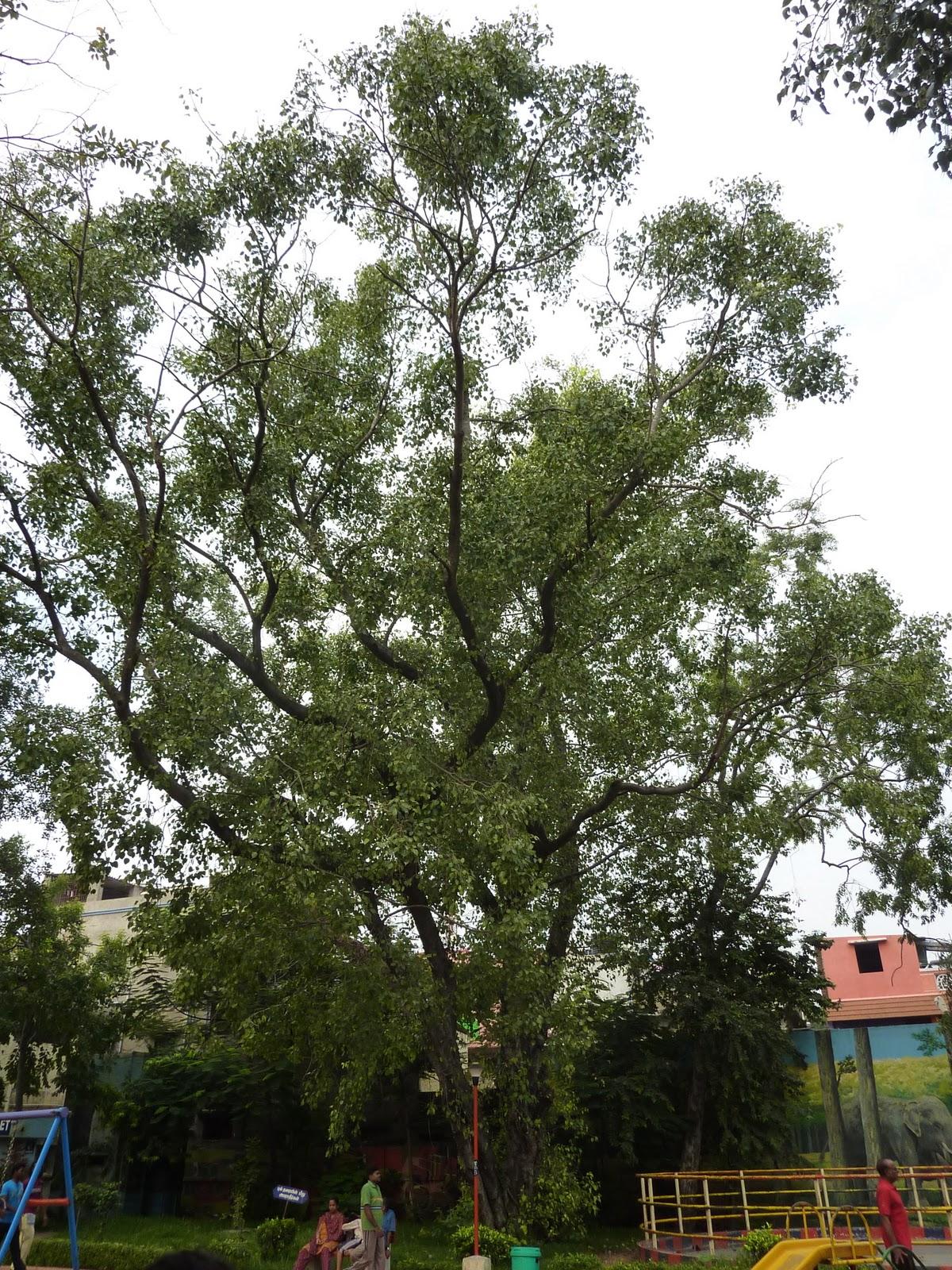 Craft Consortium Grey Trees Decoupage Papers (CCXDECP010)