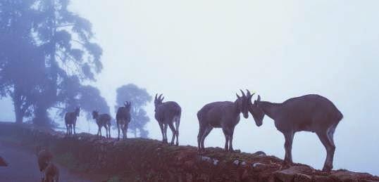 Wildlife in kanha