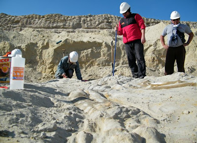Whale Bones Discovered in Desert
