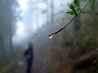 枝からの雫