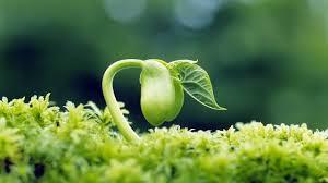 O que é germinação de sementes e quais os fatores envolvidos