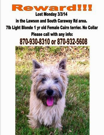 Col Potter Cairn Rescue Network Lost Cairn Terrier Jonesboro Ar