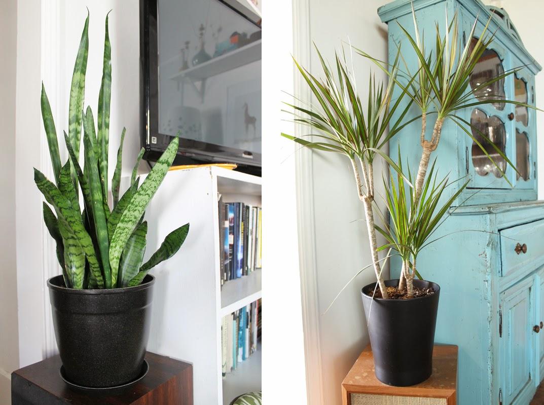 Kinda pretty great house full of plants - Pretty indoor plants ...