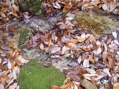 交野市・星田の山の水の流れ