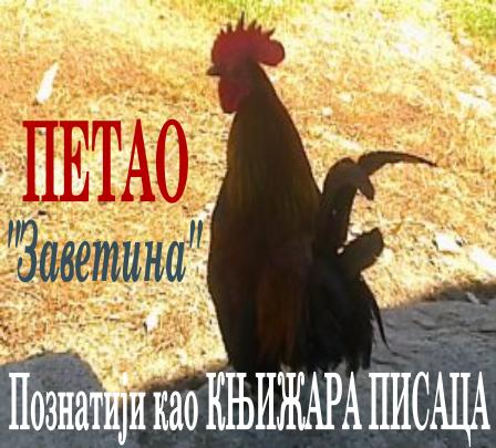 """ПЕТАО """"Заветина"""