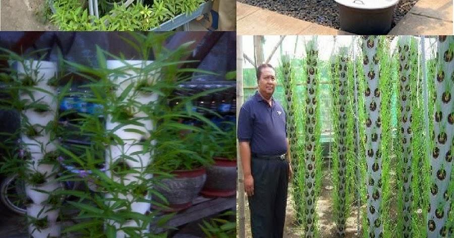 Ide Peluang Bisnis Di Desa Pertanian Yang Menguntungkan ...
