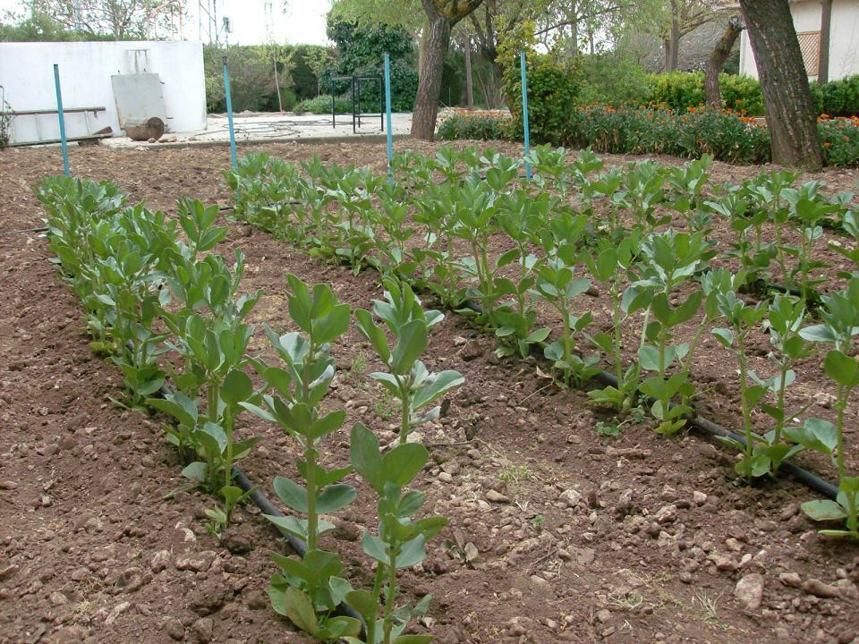 ecoplantem el huerto de oto o invierno
