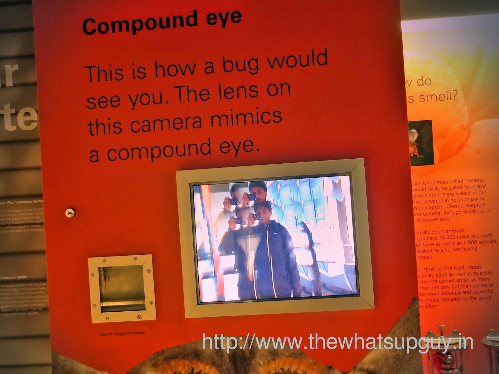 Melbourne Museum Compound Eye