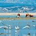 Λίμνη Κάρλα: Ένας ανεξερεύνητος ορνιθοτουριστικός παράδεισος