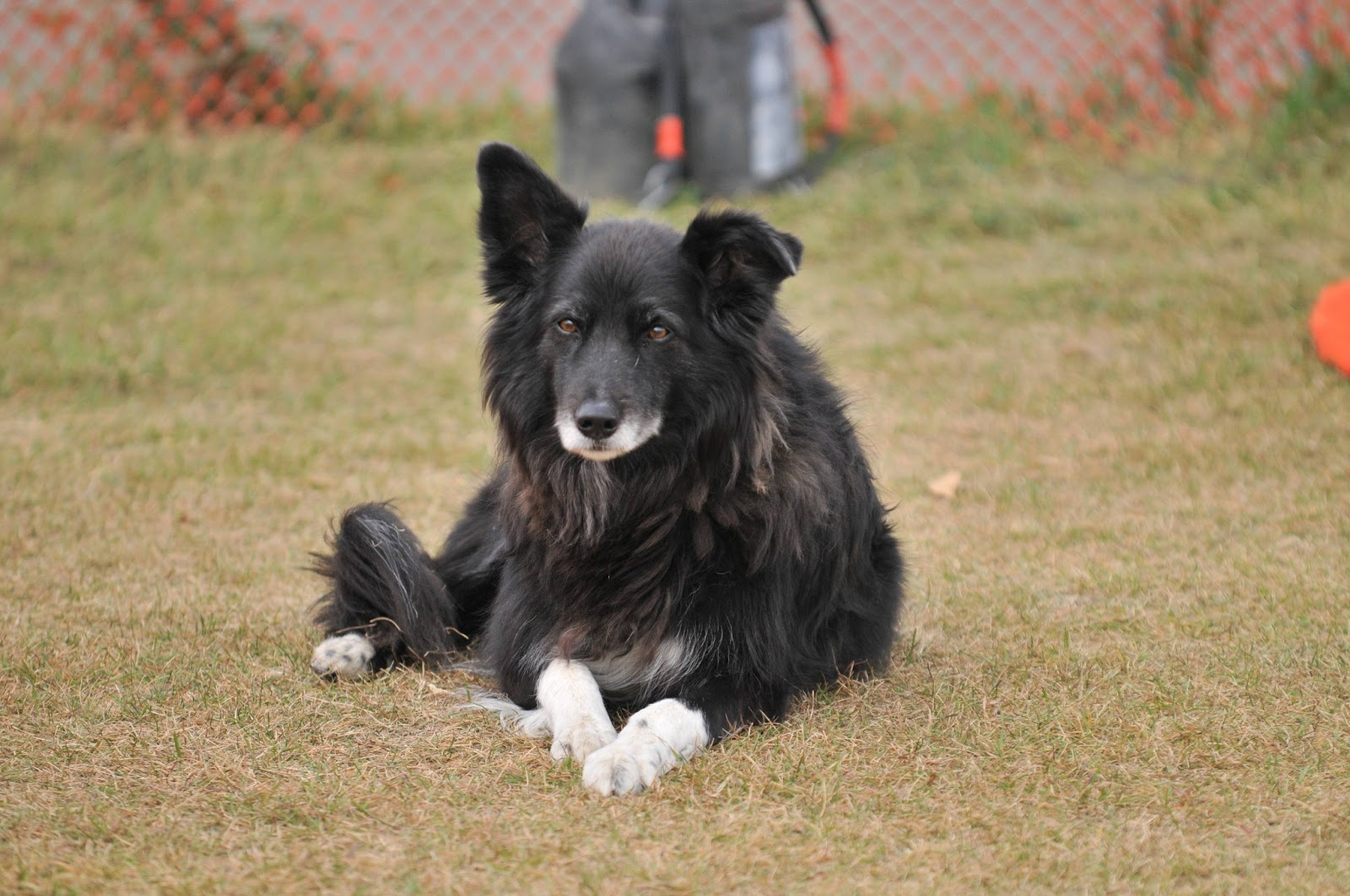 Dog of the week: Mutt! | All about dogs