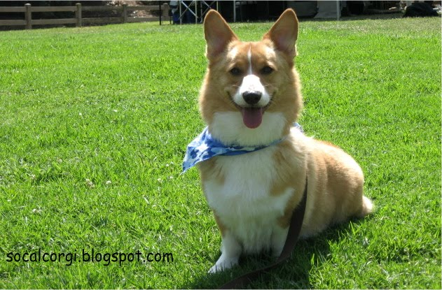 SoCal Corgi Blog