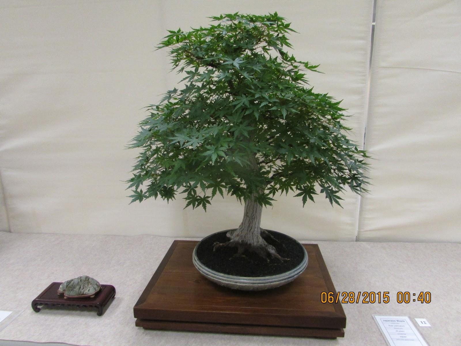 Bent Tree Bonsai
