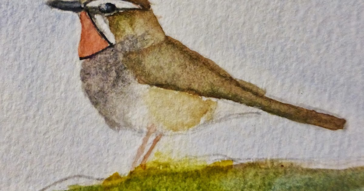 Fair Isle: Siberian Ruby Throat - Tongue & Cheeked... and other Birds.