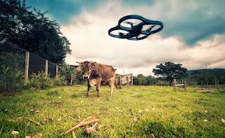 Hasselt verbiedt gebruik van drones tijdens Pukkelpop