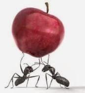 """Mengapa Semut """"Salaman"""" Ketika Bertemu"""