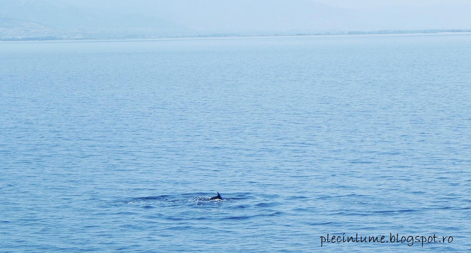 Delfini langa Thassos
