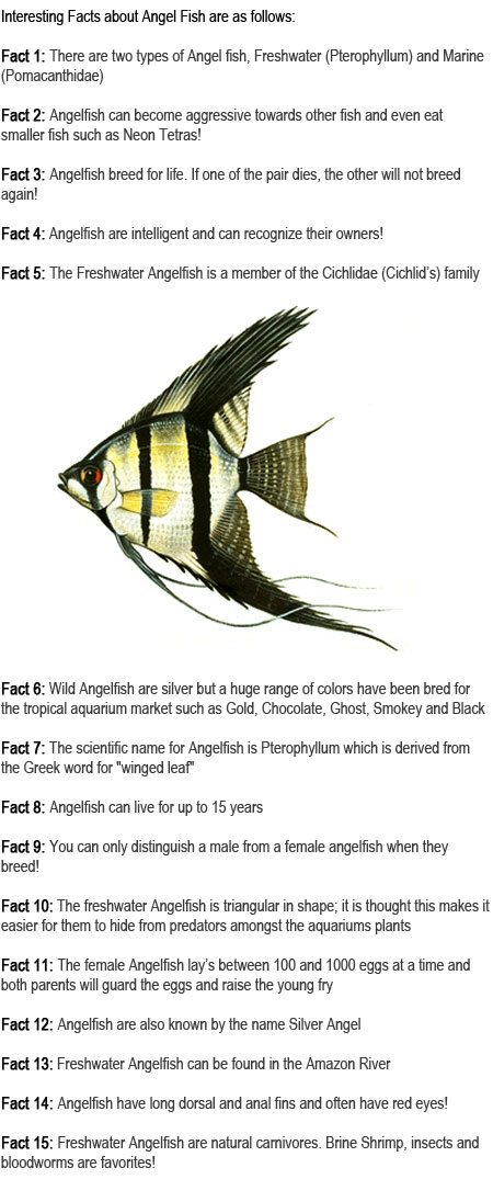 Angelfish facts for kids