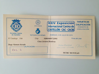 Resultado de la exposición canina celebrada en Castellon.