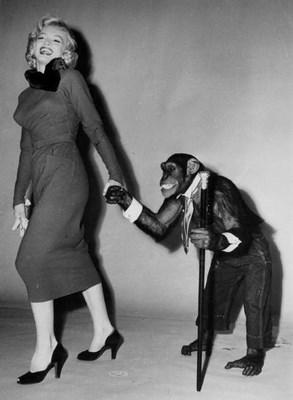 """En 1952 con el chimpacé de la película """"Me siento rejuvenecer"""" (""""Monkey Business"""")."""