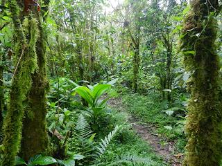 Cerro Gaital Trail