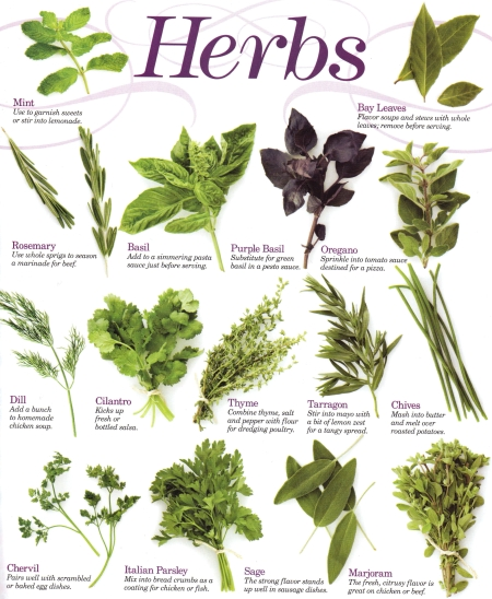 Southern california garden guide basic gardening herbs - Medicinal herbs harvest august dry store ...