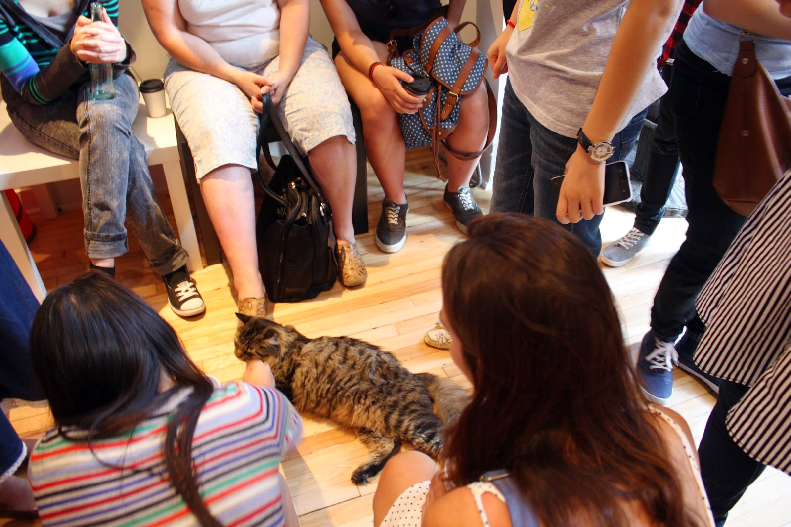 Playing with cats at Cat Cafe Montreal