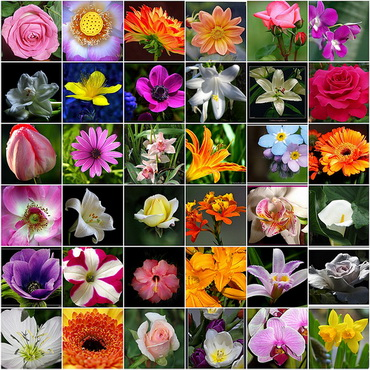 List flower namescommon flower namesgirls nameskeepandshare world flower on flowers names mightylinksfo