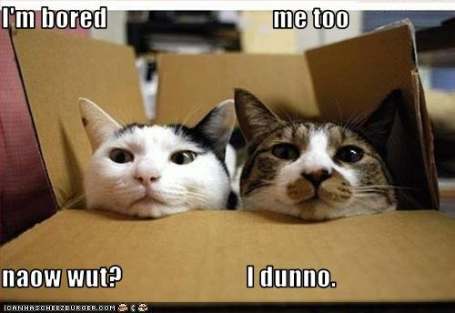 funny cat quotes. girlfriend funny cats with