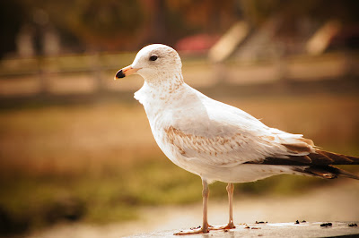 free picture of a bird
