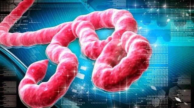 Todo sobre el virus del ébola en un vídeo de tres minutos